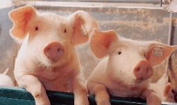 Ветеринария и животноводство